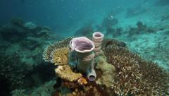 Corals on the ocean floor in the Raja Ampat islands Stock Footage