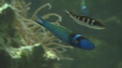 Tropical Fish in Aquarium 2 Stock Footage