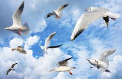 group of sea gulls - stock photo