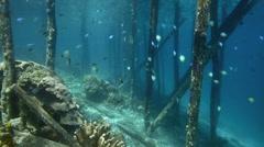 Reef fish underneath wooden pier Stock Footage