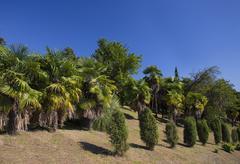 Sunny palm forest Stock Photos