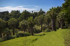 Sunny palm tree park Stock Photos