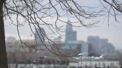 Winter tree in foreground of city skyline Stock Footage