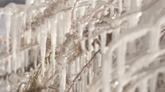 Frozen plants covered by ice near the lake Stock Footage