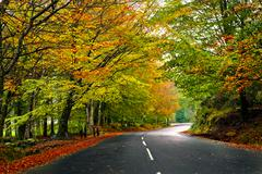 beautiful road - stock photo
