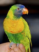 Bird Kuvituskuvat