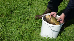 Hand pull the fish from the bucket puts on the grass for weight Stock Footage