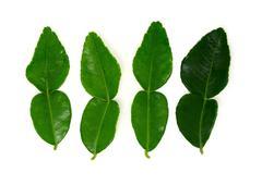Kaffir lime leaf Stock Photos