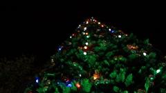 Under cristmas tree Stock Footage