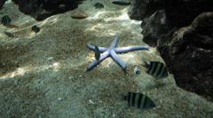 Starfish on Sea Floor in Shirahama Japan Stock Video Stock Footage