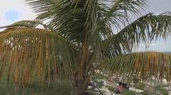 Cemetery palm tree Stock Footage