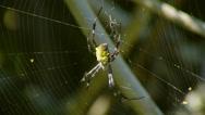 SPIDERWEB CLOSE UP Stock Footage