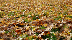 Leaves fall in november no.01 Stock Footage