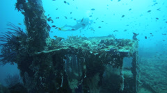 Shipwreck diving on a Japanese naval vessel Stock Footage