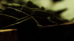 HD macro footage  bay leaves background Stock Footage
