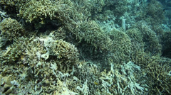 Coral reef bomb fishing - stock footage
