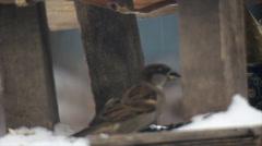 Hungry birds winter Stock Footage