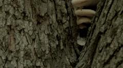 Tree Mushrooms Stock Footage