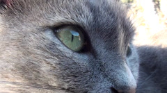 Stock Video Footage of Feline eyes close up