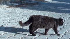 Dirty scruffy street cat Stock Footage