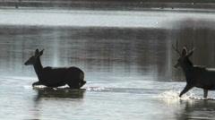 Deer Cross Lake Stock Footage