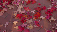 Stock Video Footage of RED AUTUMN LEAVES ON SIDEWALK