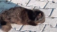 Black scruffy cat on street zoom out Stock Footage