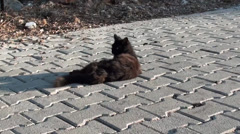 Black scruffy cat laying on street zoom in Stock Footage