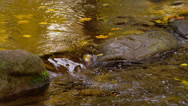 SMALL POND WATER STREAM – DRIFTING LEAVES # 2 Stock Footage