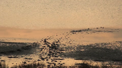Tracks of man are in a salt lake Stock Footage