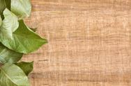 Stock Photo of vine leaf background