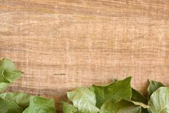 vine leaf background - stock photo