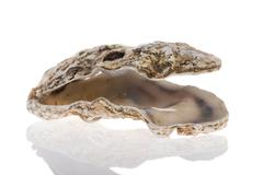 open oyster - stock photo
