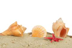 shells at the beach - stock photo
