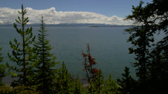 TREES BY YELLOWSTONE LAKE (PAN) Stock Footage