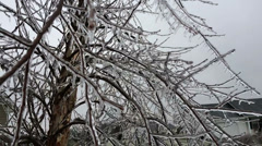 Frozen Tree - stock footage