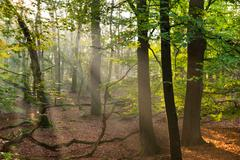sun beams in the forest - stock photo