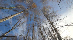 Walking through the empty trees watching the blue sky Stock Footage
