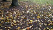 Maple leaves on the ground park autumn Stock Footage