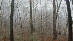 Forest Ice Storm Stock Footage