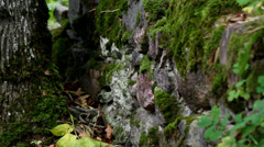 Rock stone wall covered in moss Stock Footage