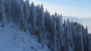 Stock Video Footage of Beautiful winter landscape, going down over conifer forest