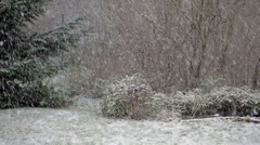 Snowfall in Garden Stock Footage