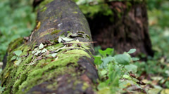 Tree trunk on the ground Stock Footage