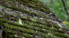 Moss has grown on top of the wooden roof Stock Footage