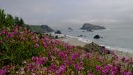 PINK SWEET PEA FLOWERS BY THE OCEAN (ZOOM IN) Stock Footage