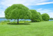 Stock Photo of Spacious green lawn with beautiful trees