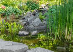Garden with aquatic plants, pond and decorative stones Stock Photos