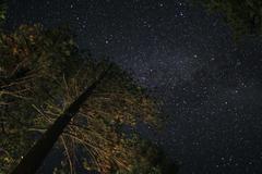 Milky Way Galaxy Lassen National Park Pine Trees USA - stock photo