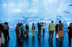 View of dubai aquarium inside dubai mall Stock Photos